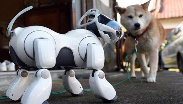 كلب الكتروني يقوم بالعديد من المهام تعرف عليه